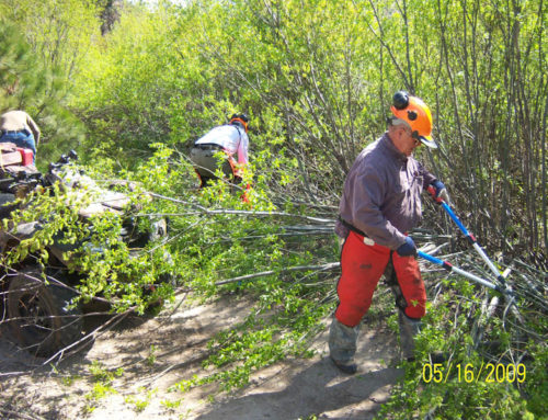 Cleaning Trails